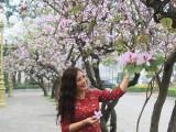 Lần đầu tiên tổ chức Lễ hội hoa ban tại Thủ đô