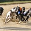Quy định về hoạt động đua chó để kinh doanh đặt cược